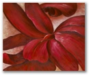 red cannas 36x48